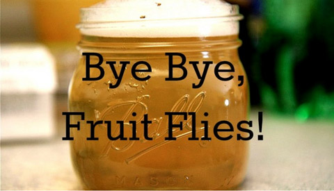 Get Rid of Fruit Flies