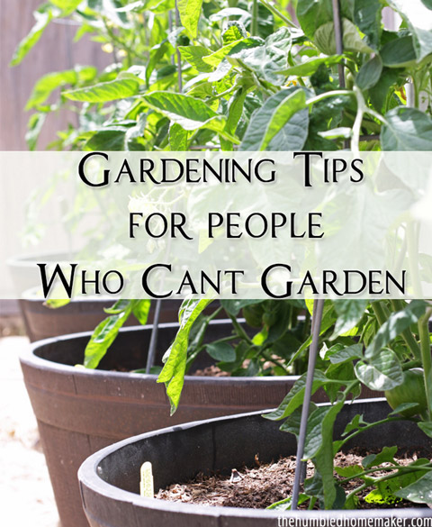 Gardening Tips for People